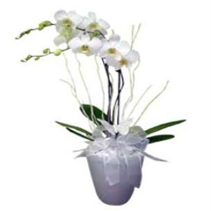 Saks� Orkide Sipari�i �zmir